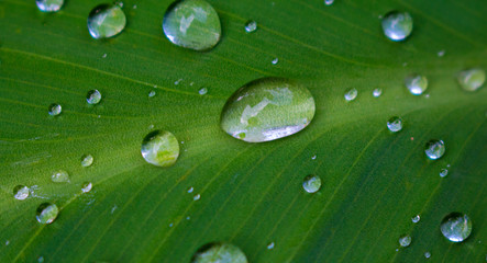 Green tropical leaf with rain water drops closeup