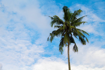 Palm tree on the blue sky background. Silhouette of coco palm crown on cloudy sky