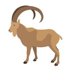 Wild  ram   vector illustration flat style