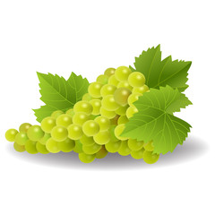 Bunch of yellow or green grapes with vine leaves isolated on white background.