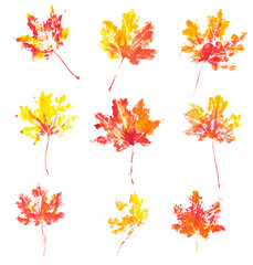 Autumn maple leaves imprint watercolor