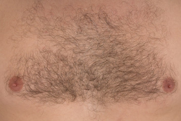 Male hair chest