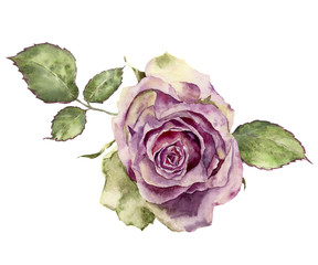 Watercolor rose with leaves. Hand painted vintage floral illustr