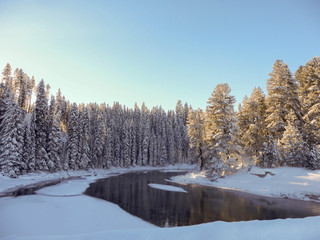 Snow-covered trees at edge of pond in winter
