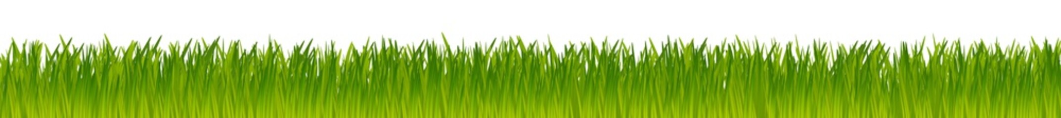 green realistic vector grass meadow isolated on white background