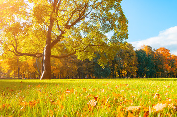 Autumn picturesque landscape in sunny autumn landscape park lit by sunlight -autumn park in sunshine