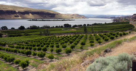 Farmer Fields Orchards Fruit Trees Columbia River Gorge