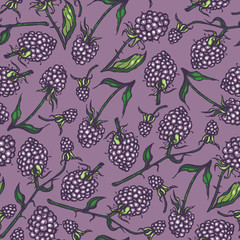 Seamless pattern with dewberry. Background. Hand drawn.