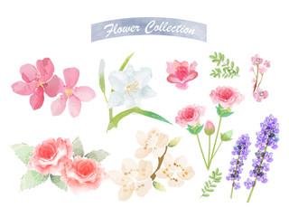 Flower watercolor elements
