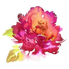 Flowers watercolor illustration