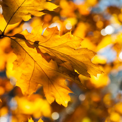 leaves in autumn forest