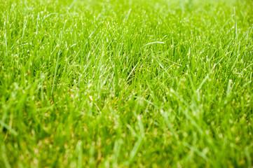Autumn - green grass