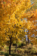 Autumn Season, Trees and Yellow Leaves. Landscapes