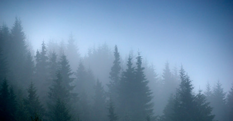 fog forest trees panorama