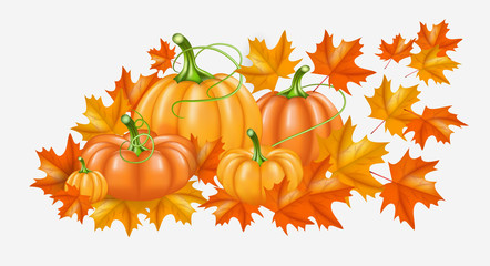 Autumn yellow, orange Pumpkins and Bright fall leaves on white background. Vector illustration for poster, card, label, banner. Thanksgiving Day background.