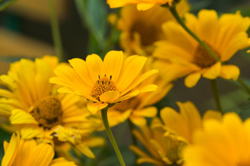 Yellow bright flower background