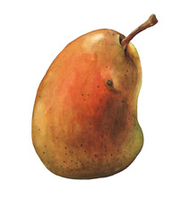Fresh pear. Watercolor hand painting illustration on isolate white background.