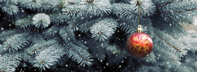 Close up of red christmas ball on fir tree branch