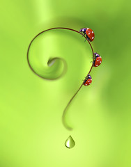 Question mark creative idea with ladybugs and a drop of dew. Three funny ladybugs are on a leaf in the form of a question mark on a beautiful bright green background. Macro.