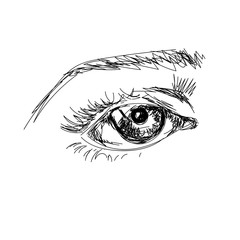 hand draw scetchy big eye with brow on the white background