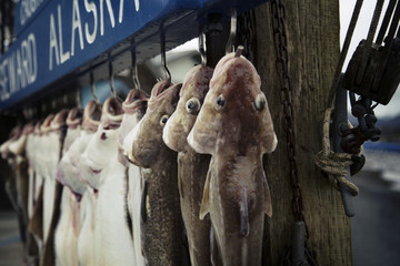 Fish hanging on hook at market stall