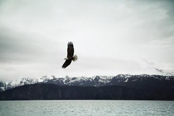 Bald eagle flying over sea against cloudy sky