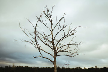 Low angle view of bare tree against cloudscape