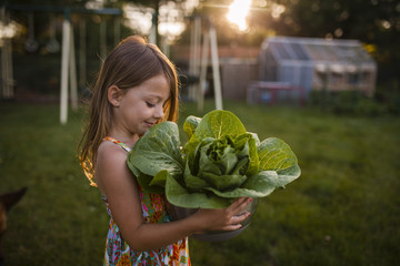 Girl looking at lettuce while standing in backyard