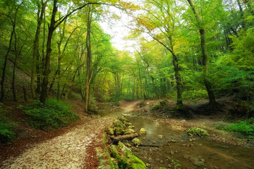 Flowing stream in forest with path