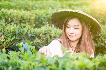 Asian women Works In Green Tea Plantation