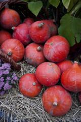 red pumpkins decoration