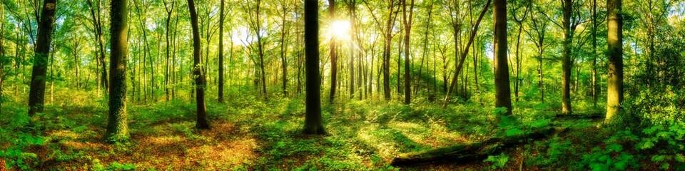 Fototapete - Waldpanorama mit Sonnenstrahlen