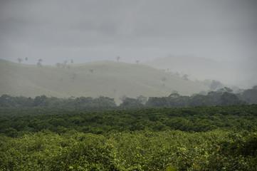 Fotobehang Heuvel Mountain Pine Ridge Reserve, Landscape