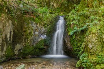 Edelfrauengrab-Wasserfälle; Schwarzwald, Sommer