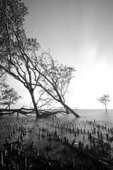 black and white image of stump and root of mangrove tree on the seashore during low tide water