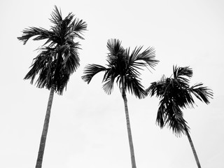 Palm trees against sky in black and white.