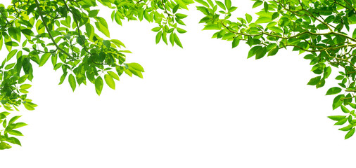 panoramic Green leaves on white background Wall mural