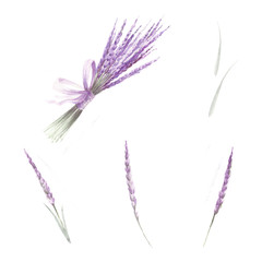 A set of lavender flowers. Hand draw watercolor illustration.