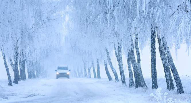 Bad Road Conditions, Car driving on Snow and Ice covered Avenue of Birch Trees