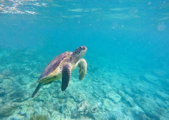 Underwater image with green sea tortoise
