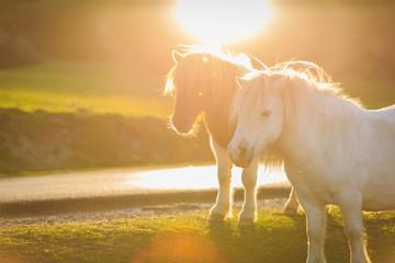 Horses on pasture evening near sunset