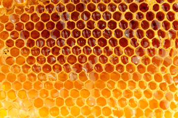 Honey Bee Wax Honeycomb