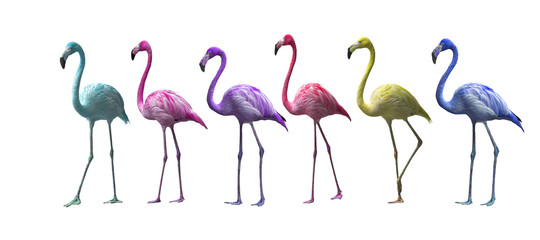 Bird flamingo walking on a white background , flamingo isolated on white background ,Beautiful bird flamingo