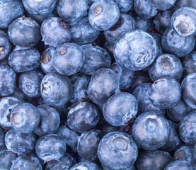 blueberries Freshly picked blueberries
