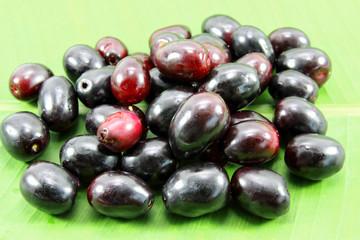Jambolan plum, Java plum, Jambul( Syzygium cumini (L.) Skeels. )