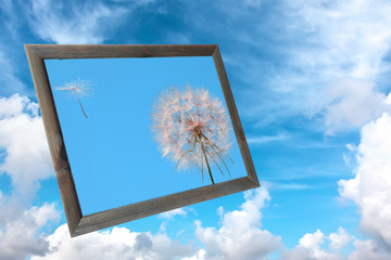 Old wood photo frame with photo of a dandelion losing fuzzes on the background of the blue sky with fluffy white clouds. Nature abstract.