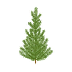 Christmas fir tree. Isolated, detailed, photo-realistic  illustration on  white background.