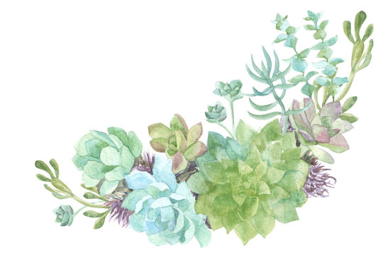 watercolor flowers succulents