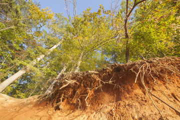 A forest scene with exposed roots in Troutman, North Carolina.