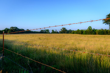 Barbed wire fence along a golden field